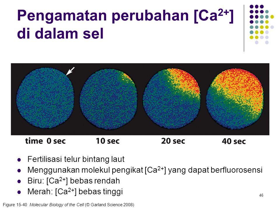 Pengamatan perubahan [Ca2+] di dalam sel